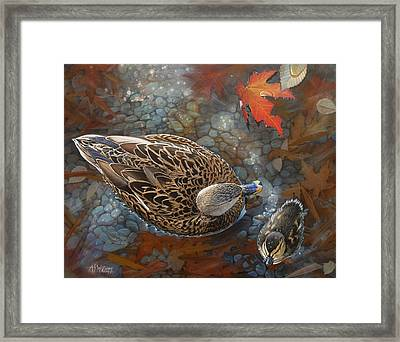 Bird's Eye View Framed Print by Angela S Williams