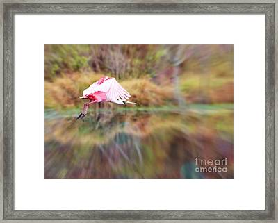 Birds Eye View Framed Print by Carol Groenen