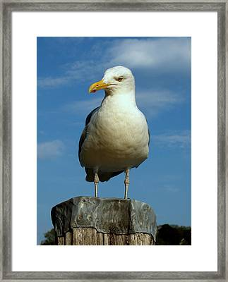 Framed Print featuring the photograph Bird's Eye View by Caroline Stella