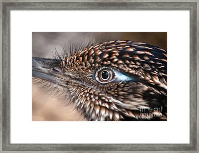 Bird's Eye View Framed Print by Dan Holm
