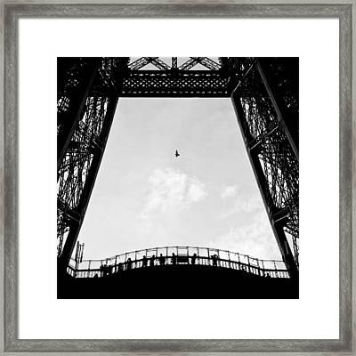 Birds-eye View Framed Print