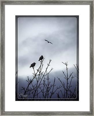 Framed Print featuring the photograph Birds For Breakfast by Glenn Feron