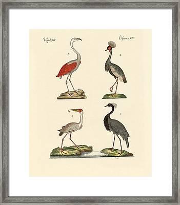 Birds From Hot Countries Framed Print by Splendid Art Prints