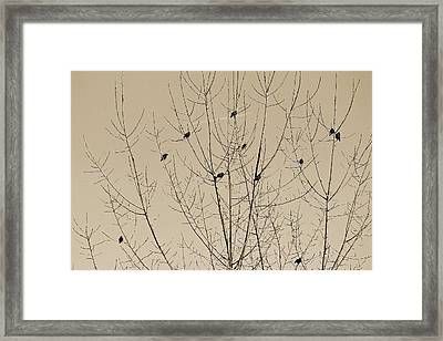 Birds Gather Framed Print