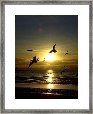 Birds Gathering At Sunset Framed Print