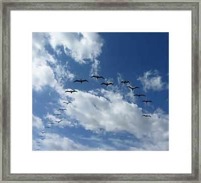 Birds In A V Framed Print by Cathy Lindsey