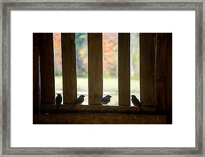 Birds In Barn Window Framed Print by Donna Doherty