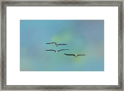 Birds In Flight Framed Print by Greg Stew