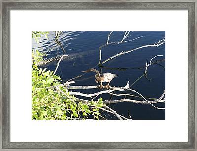 Birds In Florida IIi Framed Print by Peter Togel