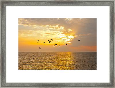 Framed Print featuring the photograph Birds In Lake Erie Sunset by David Coblitz