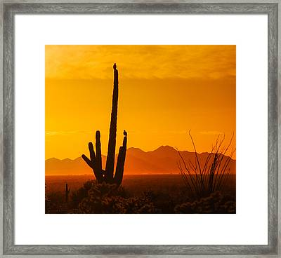 Birds In Silhouette Framed Print