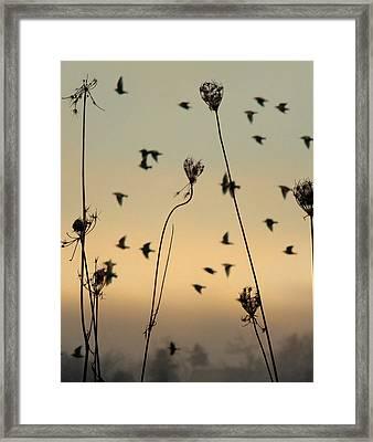 Birds In The Sky Framed Print