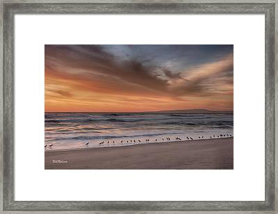 Birds In The Surf Framed Print by Bill Roberts