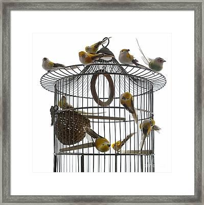 Birds Inside And Outside A Cage Framed Print by Bernard Jaubert
