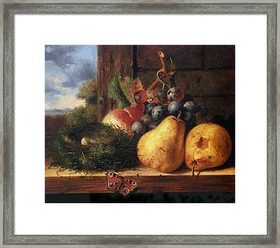 Birds Nest Butterfly And Fruit Framed Print by Edward Ladell