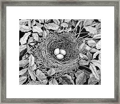 Bird's Nest Framed Print by Janet King
