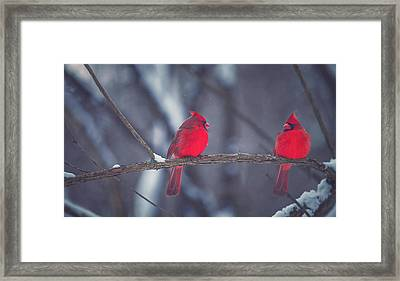 Birds Of A Feather Framed Print by Carrie Ann Grippo-Pike