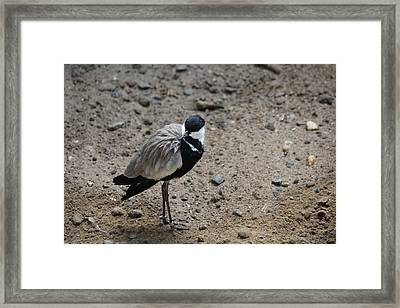 Birds Of A Feather Flock Alone Framed Print