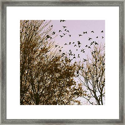 Birds Of A Feather Flock Together Framed Print by Thomasina Durkay