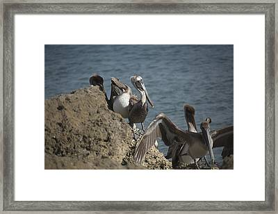Birds Of A Feather Framed Print by Joel P Black