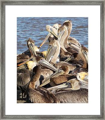 Birds Of A Feather Framed Print by John Glass