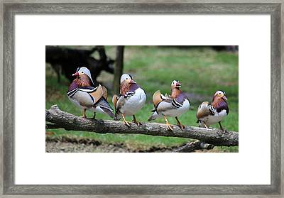 Birds Of A Feather Framed Print by Marty Fancy