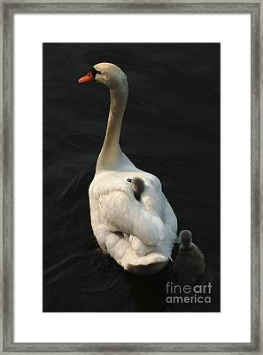 Birds Of A Feather Stick Together Framed Print by Bob Christopher