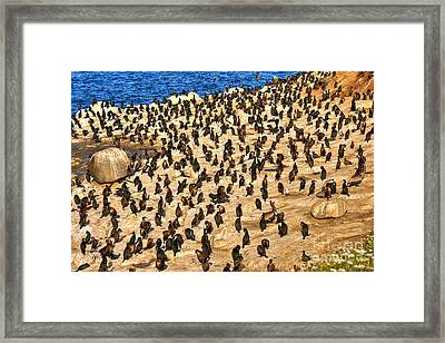 Framed Print featuring the photograph Birds Of A Feather Stick Together by Jim Carrell