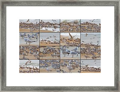 Birds Of Many Feathers Framed Print