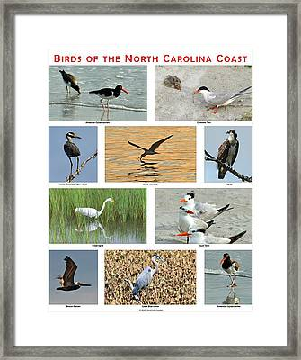 Birds Of North Carolina Coast Framed Print