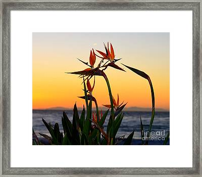 Birds Of Paradise Framed Print
