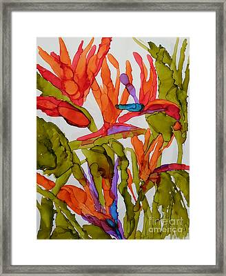 Birds Of Paradise Framed Print by Vicki  Housel