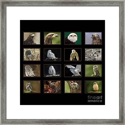Birds Of Prey Of Canada Framed Print by Inspired Nature Photography Fine Art Photography