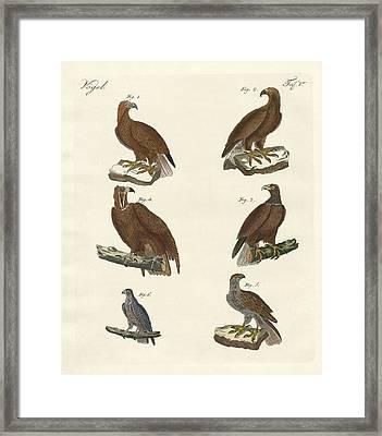 Birds Of Prey Framed Print by Splendid Art Prints