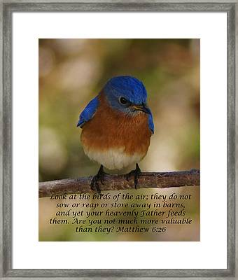 Birds Of The Air Framed Print