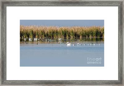 Birds Enjoying The Freshwater Marsh Framed Print