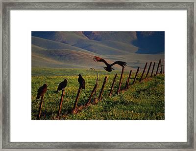 Birds On A Fence Framed Print by Matt Harang