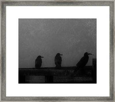 Birds On A Fence Framed Print by Michelle O'Neill