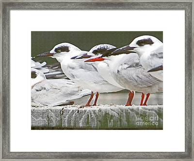Birds On A Ledge Framed Print