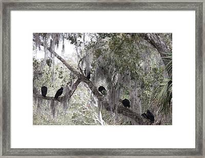 Birds On A Limb Framed Print by Kimberly Oegerle