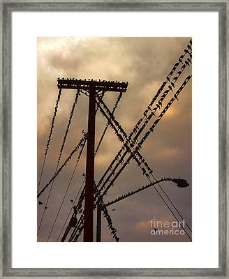Birds On A Wire Framed Print by Gregory Dyer