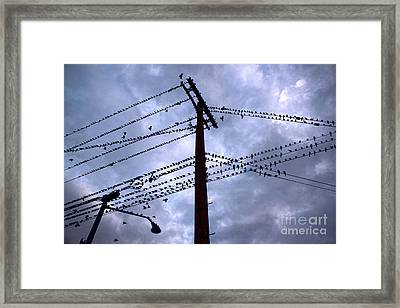 Birds On A Wire In Blue Framed Print by Gregory Dyer