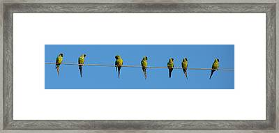 Birds On A Wire Framed Print by Julie Cameron