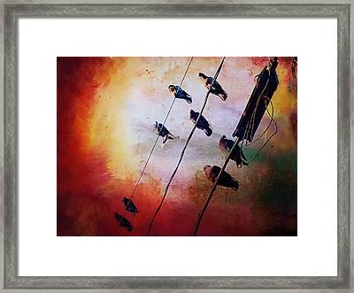 Birds On A Wire Framed Print by Micki Findlay