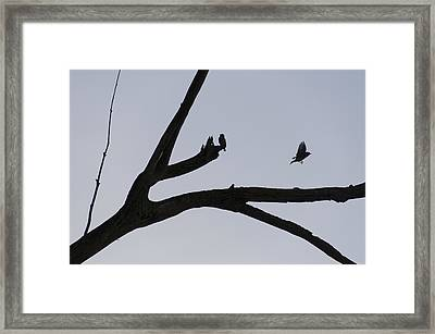 Birds On An Old Tree Limb Framed Print