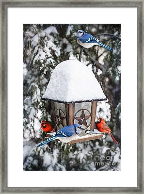 Birds On Bird Feeder In Winter Framed Print
