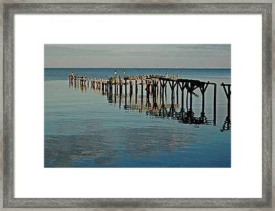 Birds On Old Dock On The Bay Framed Print by Michael Thomas