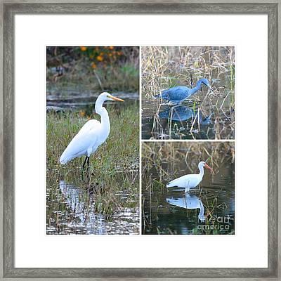 Birds On Pond Collage Framed Print by Carol Groenen