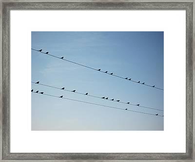Birds On Telephone Lines Framed Print