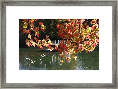 Birds Over Water Framed Print by Jocelyne Choquette